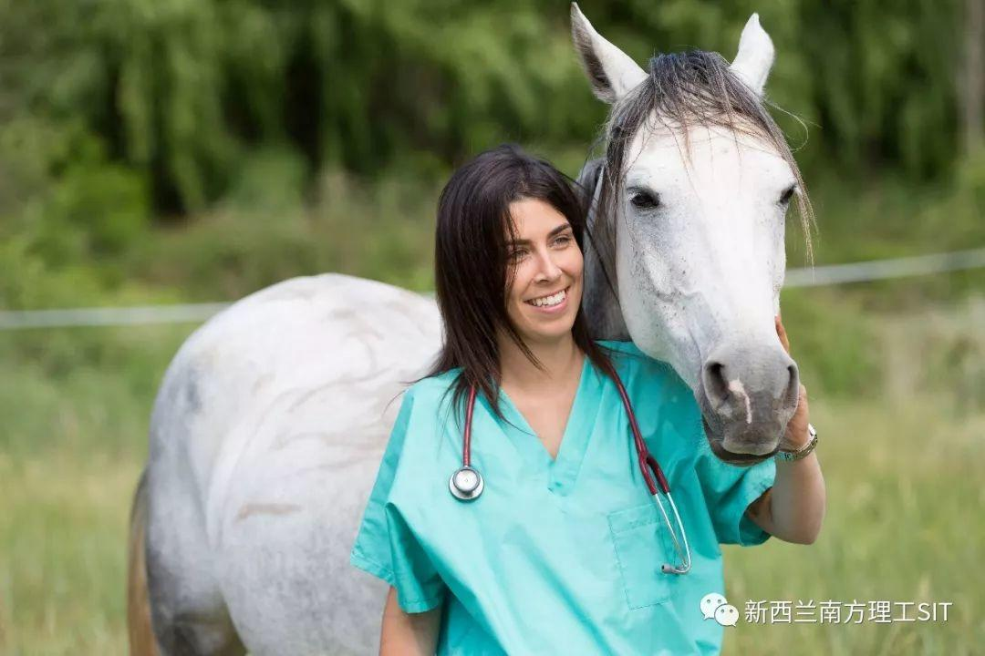 新西兰南方理工学院——兽医护理专业详解(2019年4月11日更新)